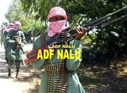 Traque de rebelles à Beni : Les députés appellent la Monusco à appuyer les FARDC par des avions