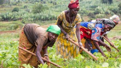 Photo of RDC: Les femmes rurales au four et au moulin en faveur des Zones urbaines mais délaissée